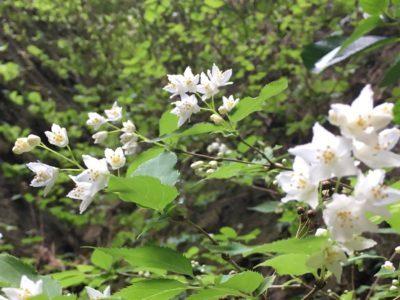 4月にはこんな美しい花も