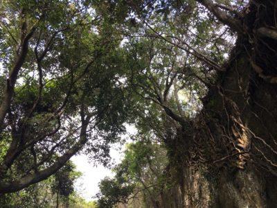千葉県のラピュタ!鋸山、ジブリの世界の森