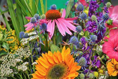 華やかな花たち
