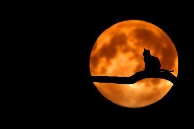 満月の話題